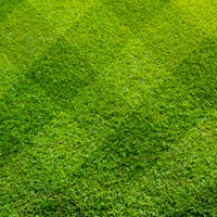 Lawn Care Isleworth
