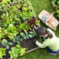 Garden Maintenance Isleworth