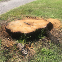 Stump Grinding Isleworth
